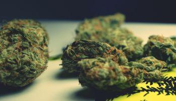 Close Up Of Marijuana On Table