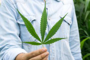 Midsection Of Man Holding Marijuana