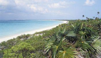 Beach with vegetation