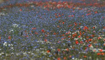 Wildflowers on the Peene